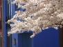 2010 Blossom