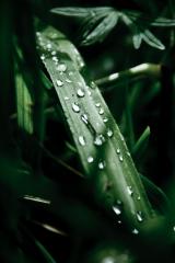 Grass tears